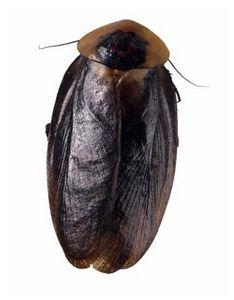 Make your own roach killer!