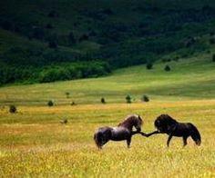 I do love my horses.