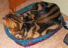 Cat Box Bed