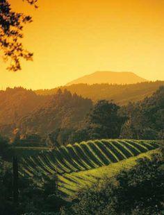 Beautiful Napa Valley, California, USA