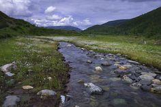 Moose Creek in Denali National Park  Preserve