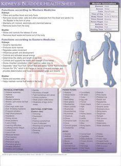 Health sheet for Kidney/Bladder