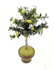 how to: lemon tree