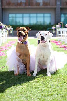 Flower puppies