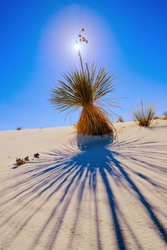 Been there... actually lived near there!! White Sands National Monument, New Mexico United States
