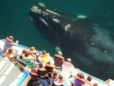 see a whale up close