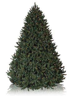 Rocky Mountain Pine Artificial Christmas Trees, Prelit Artificial Christmas Potted Tree - Balsam Hill