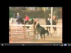 showjump hors