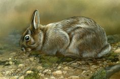 Progress on the rabbit series - Paintings of Wildlife & Nature by Rebecca Latham