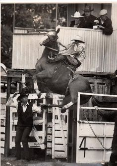"Clarrie, ex racehorse....A bit unusual for a rodeo ""bronc""....she's a thoroughbred mare who kept bucking off her jockeys, so now she has a new career.  And she apparently is enjoying it.  Said to be a record height for a bucking horse coming out of the chute!   This girl is flying!"