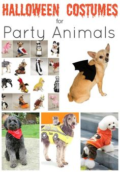 Halloween Costumes for Dogs! Dog Costumes.