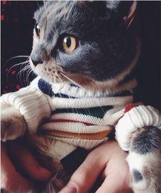 A cat in a sweater.