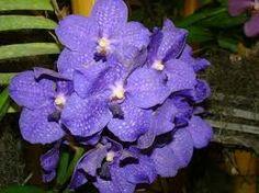 Hacer Licores Caseros: Como se hace licor de violetas casero.