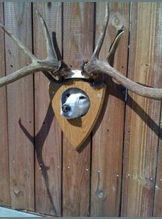 Ha! Ha! Cute peephole for the dog Fence idea!