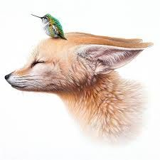 Image result for fox curled up drawing
