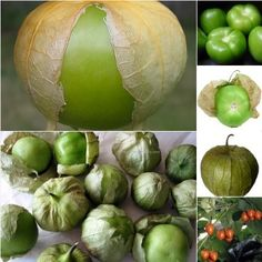 Tomatillo: A Growing Guide