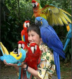 macaws in many colors