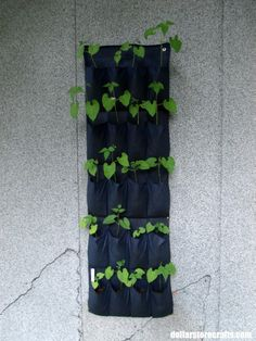 beans in shoe rack - Rhonda's dollar store garden is coming along!