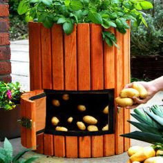potato barrel with opening at bottom...from facebook page grow food, not lawns