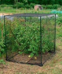 Another great find on #zulily! Small Fruit Cage #zulilyfinds