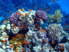 Animals in the Coral Reef | coral-reef-scene