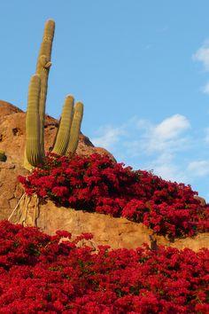 CamelBack Mountain - Phoenix Arizona