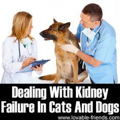 cat, dog kidney failure