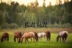 Home - Bull Hill Guest Ranch