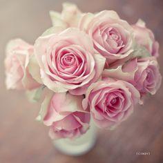 I love all roses, bu
