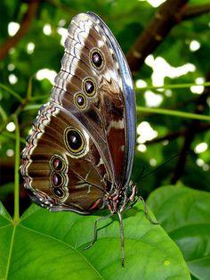 ɛïɜ Butterfly ɛïɜ