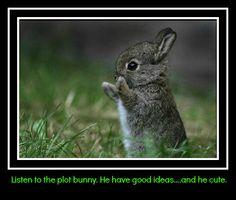 Plot bunnies...argh.