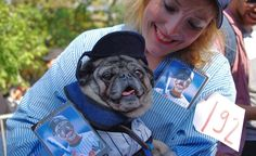 """Gus even has his own baseball card! His Yankees costume is an elaborate joke: """"Derek Jeter's Last One-Night Stand,"""" inspired by the rumor that the newly retired shortstop gives baskets full of memorabilia to all of his, ahem, conquests. After reading that gossip, Gus's owner said, """"I thought, 'I have to do it.'"""" http://budgettravel.com/slideshow/americas-weirdest-and-cutest-parade,47636/"""