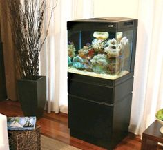 salt water tank...love!!