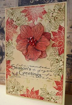 Season's Greetings, via Flickr.  Note to self - remember this flower