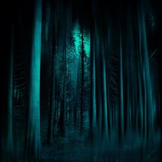 Dark spooky forest scene - digitally treated photograph  Prints & more: http://society6.com/DirkWuestenhagenImagery/a-fOresT-Of-secreTs_Print