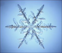 This is a real snowflake magnified… stunning!