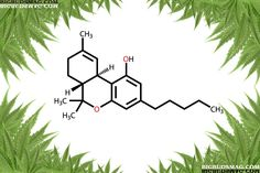 Grow Medical Marijuana Strains With The Highest THC and CBD