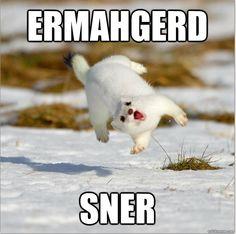 Sner!