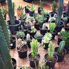 i'm so green beautiful cacti, friends, potted plants, cactus plants, gardenista urban, green, small gardens, bohemian, garden pots