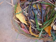 """Build a bird's nest using items gathered from nature walk - from Pink Stripey Socks ("""",)"""