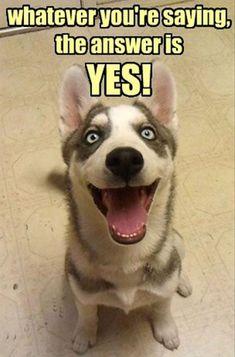 funny dogs., funni stuff, anim, funni dog, doggi