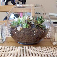 DIY instructions on how to make your own succulent garden in a fish bowl! Great for those of us who don't have a green thumb.