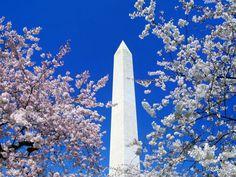 america, vacat, cherri blossom, virtual travel, washington monument, washington dc, place, cherry blossoms