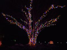 botan garden, holiday lights, holiday imag, botanical gardens