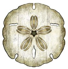 White Sand Dollar with Brown accents from Suzanne Nicoll