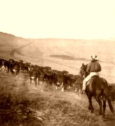The Goodnight-Loving Trail was one of many cattle trails in the American West.