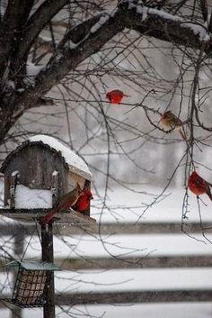 Birds on a Snowy Day