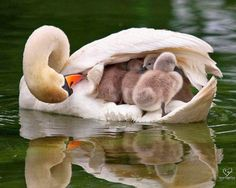Caring mom...
