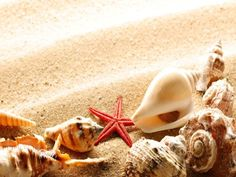 Sea shells <3