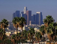 Los Angelos angles, palm, city of angels, dream, california, trees, los angeles, places, travel